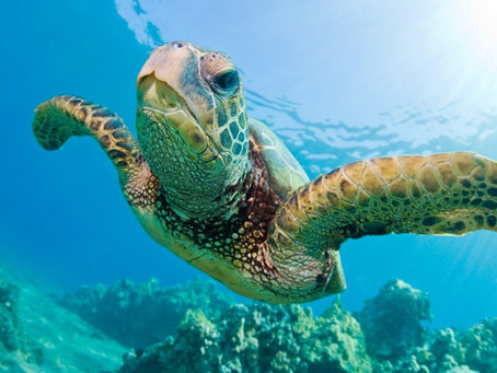 Celebrate Sea Turtles