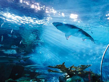 Celebrate National Aquarium Month by Visiting Ripley's Aquarium