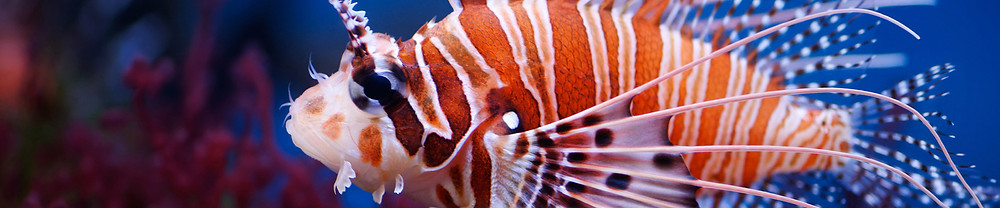 Celebrate National Aquarium Month by visiting Ripley's Aquarium during your Myrtle Beach vacation at Grand Palms Resort.