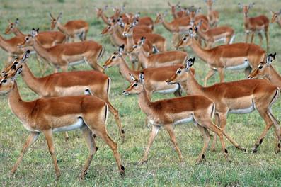 The Ol Pejeta Conservancy, Kenya
