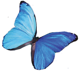 Vol14butterfly.png