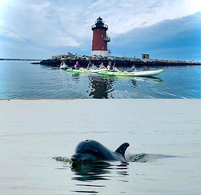 light-house-dolphin
