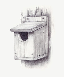 Nest+Box+damaged+by+Woodpecker