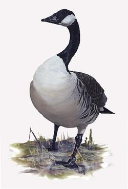 Goose Web