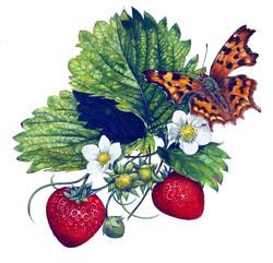 Comma+Butterfly.jpg