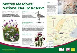 Mottey Meadows