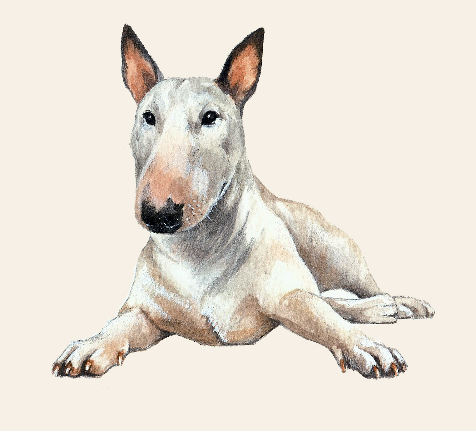 English Bull Terrier Artwork
