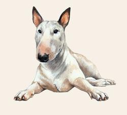 English Bull Terrier Artwork