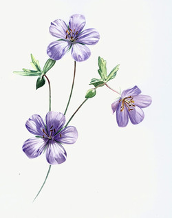 flower+study+2