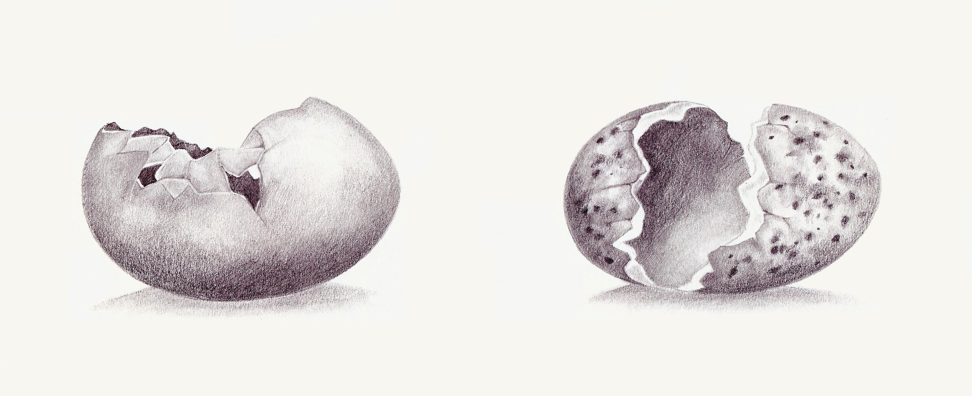 Revised+Egg