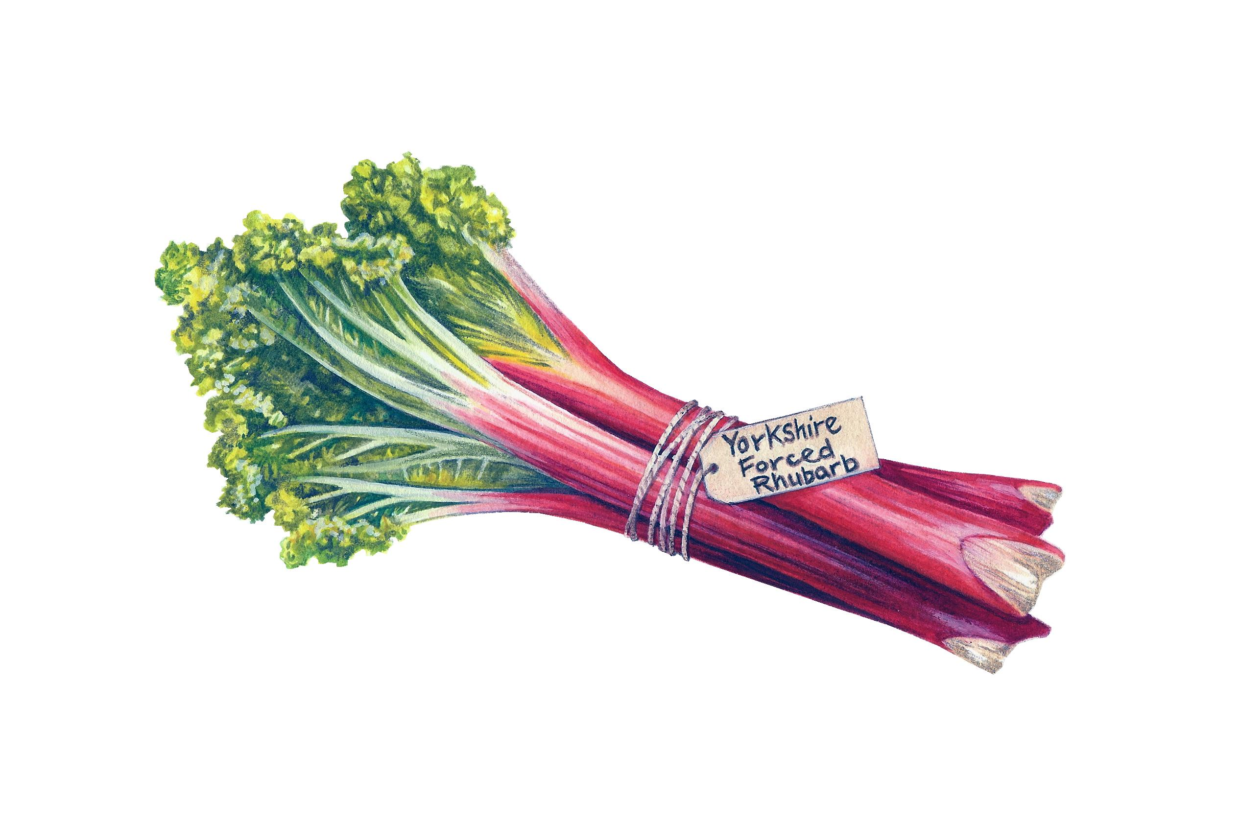Yorkshire Forced Rhubarb Artwork