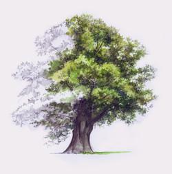 Oak+Artwork+2