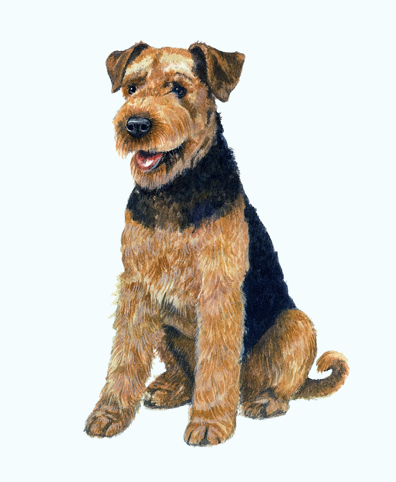 Airedale Artwork