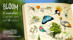 Chester Zoo Board