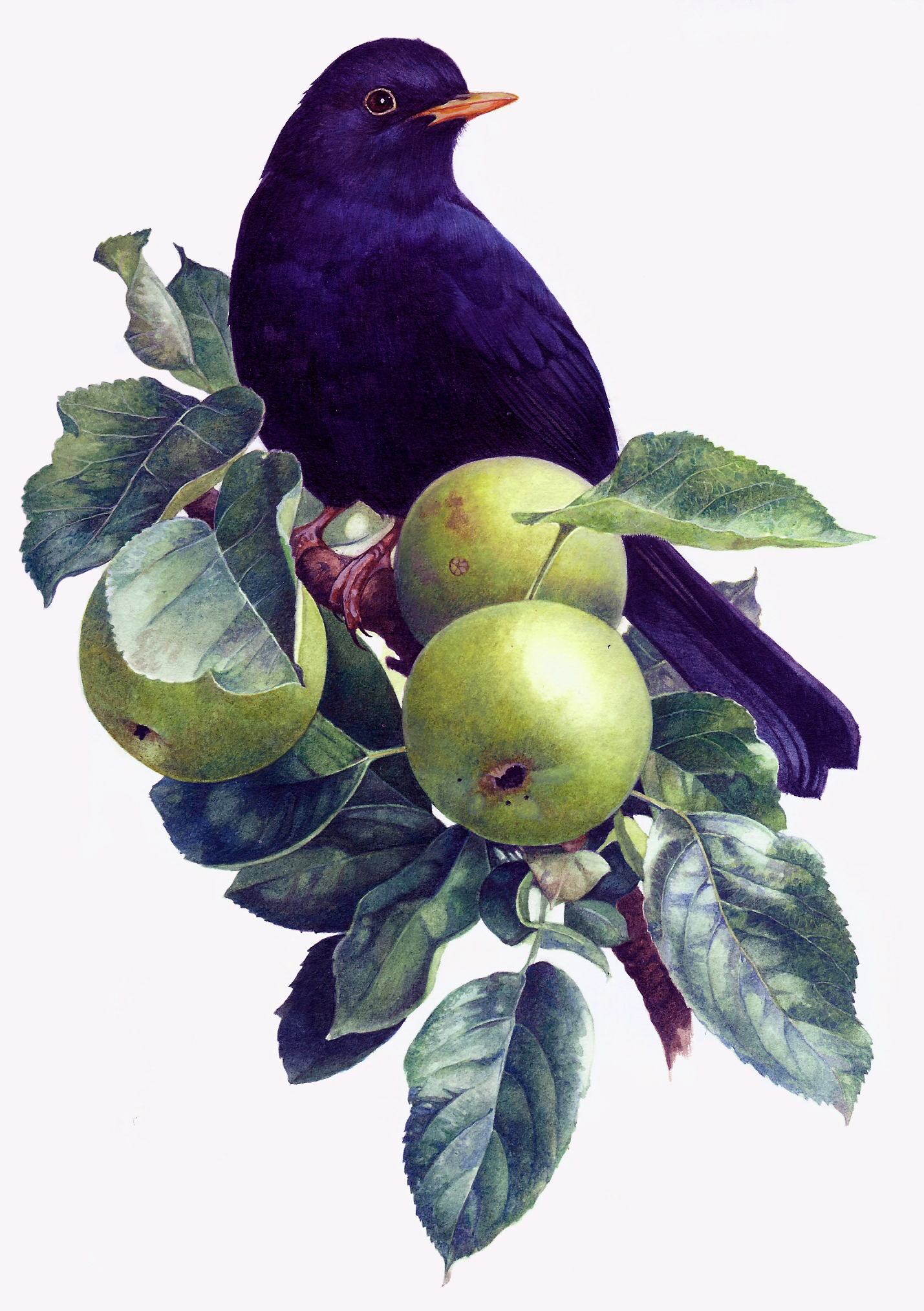 Blackbird+in+an+Apple+tree_edited-1