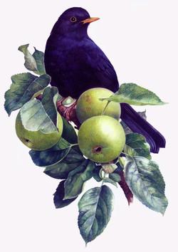 Blackbird+in+an+Apple+tree_edited-1