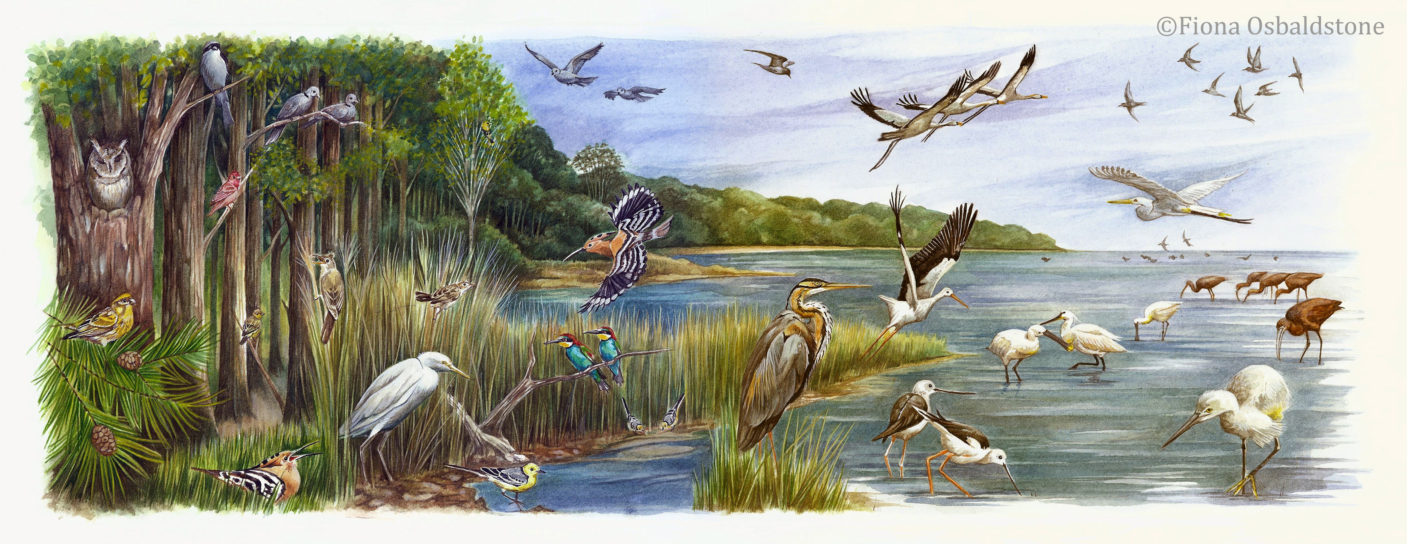 Avian Arrivals