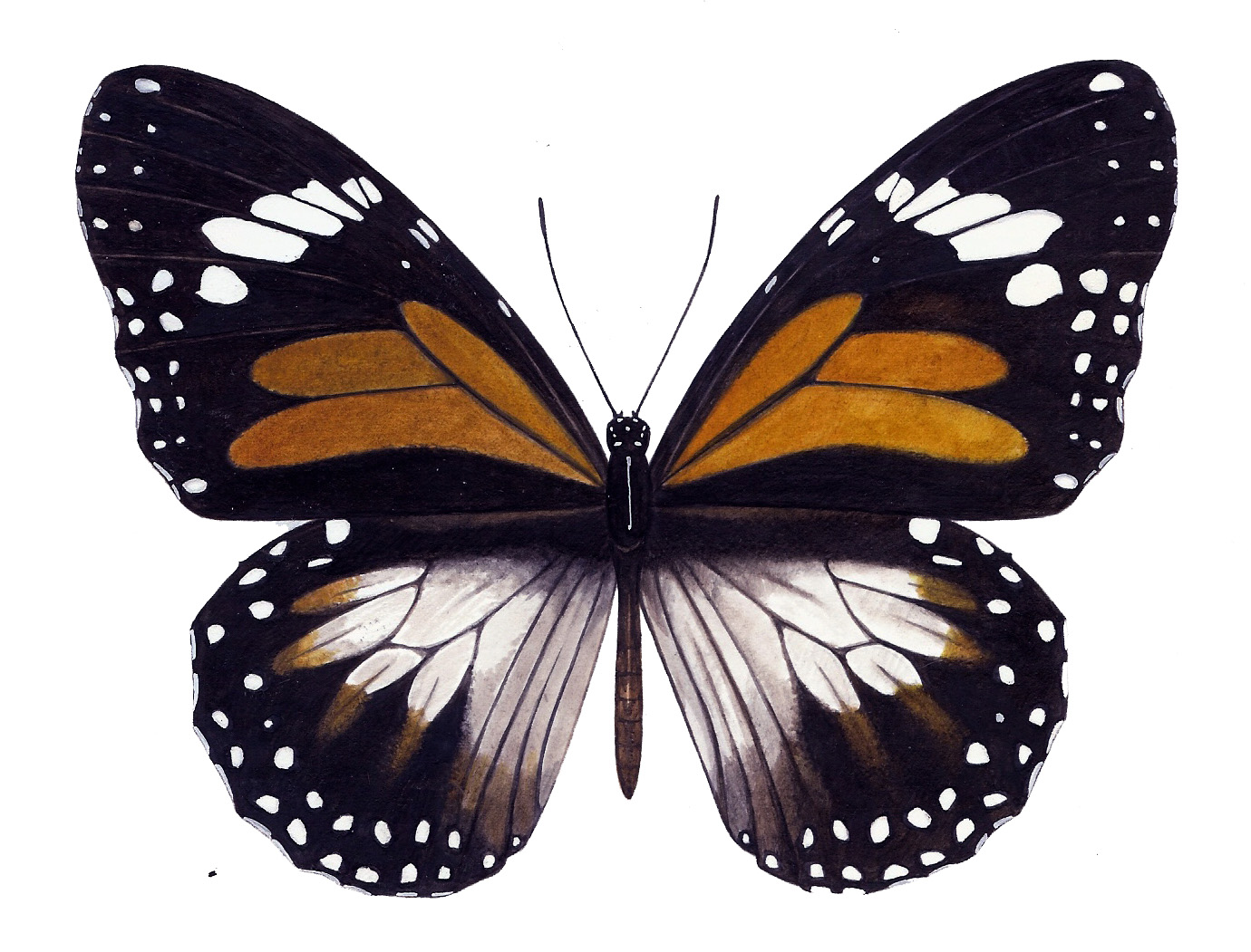 Butterfly+5