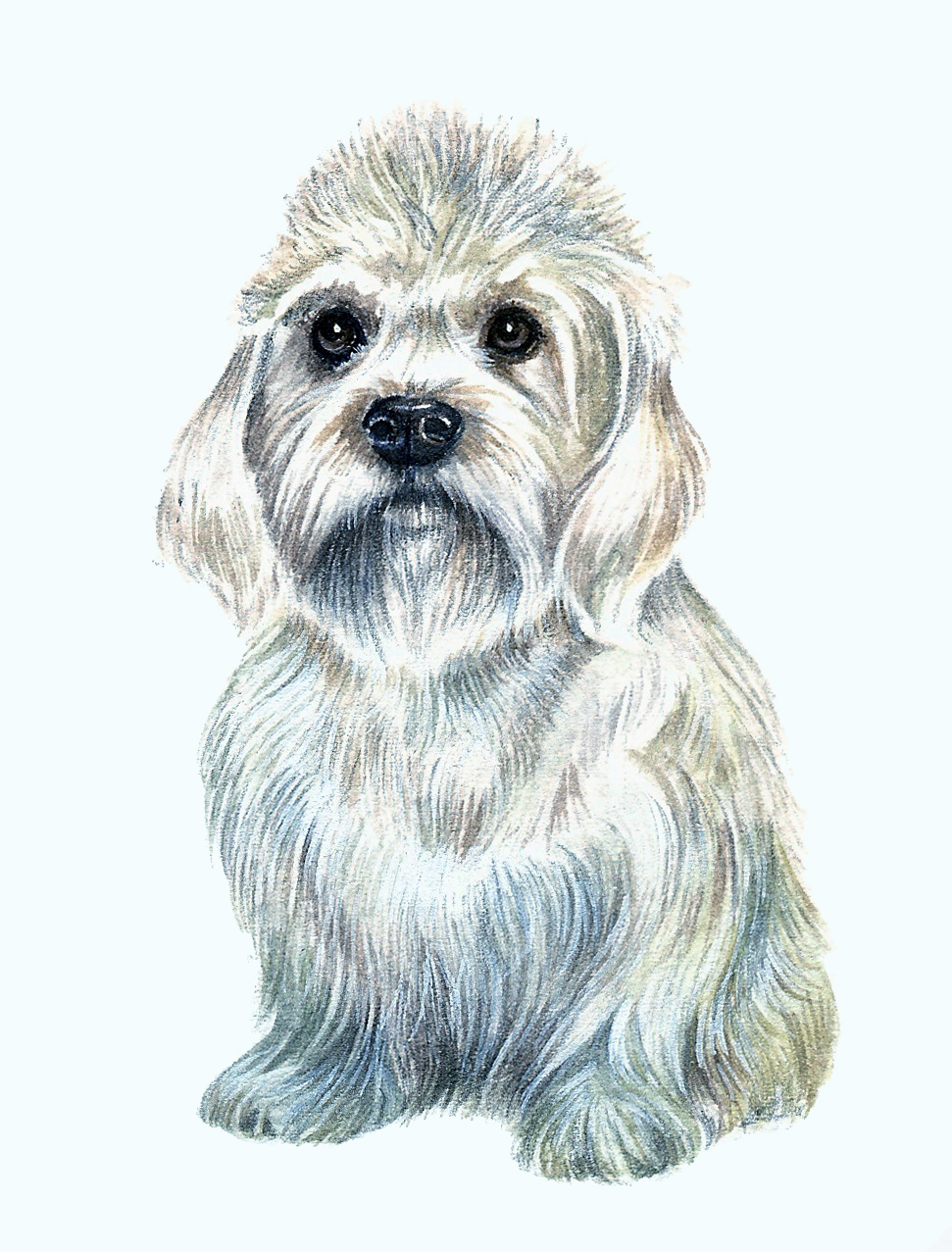 Dandie Dilmont Artwork