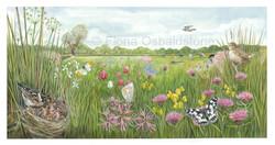 Iffley Meadow