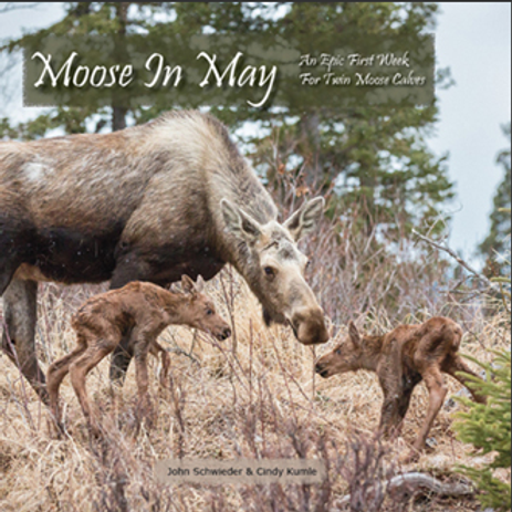 Moose in May