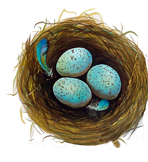 robin's nest.png