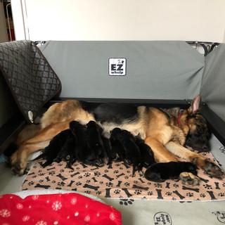 Blitz Puppy feeding.jpg