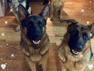 My bodyguards..jpg
