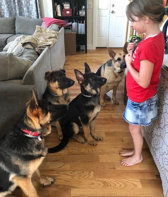 Teaching the dogs to respect the skin ki