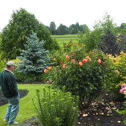 Sebright Gardens  Salem, OR