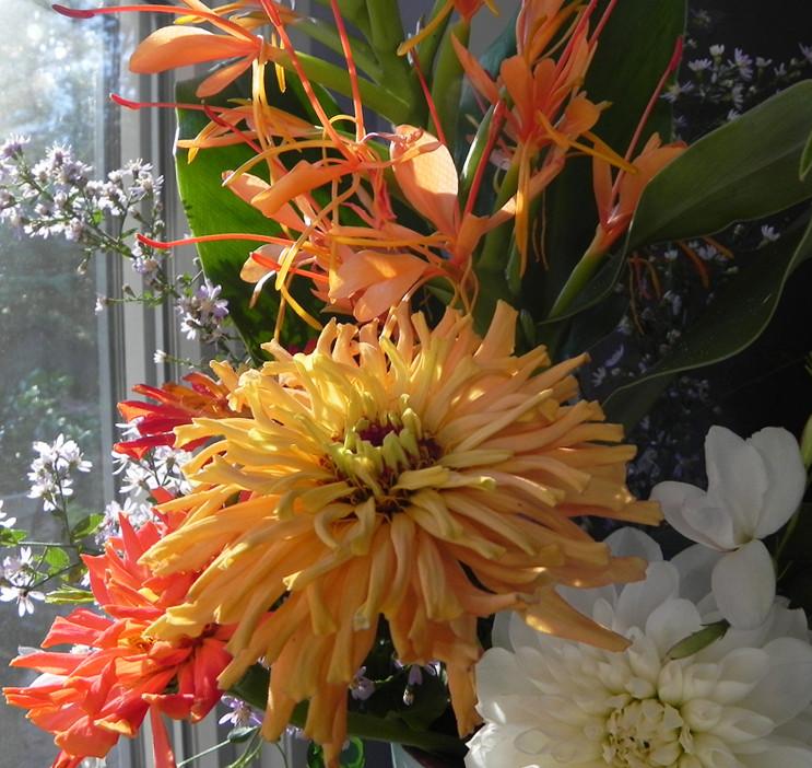 cut flowers garden flowers