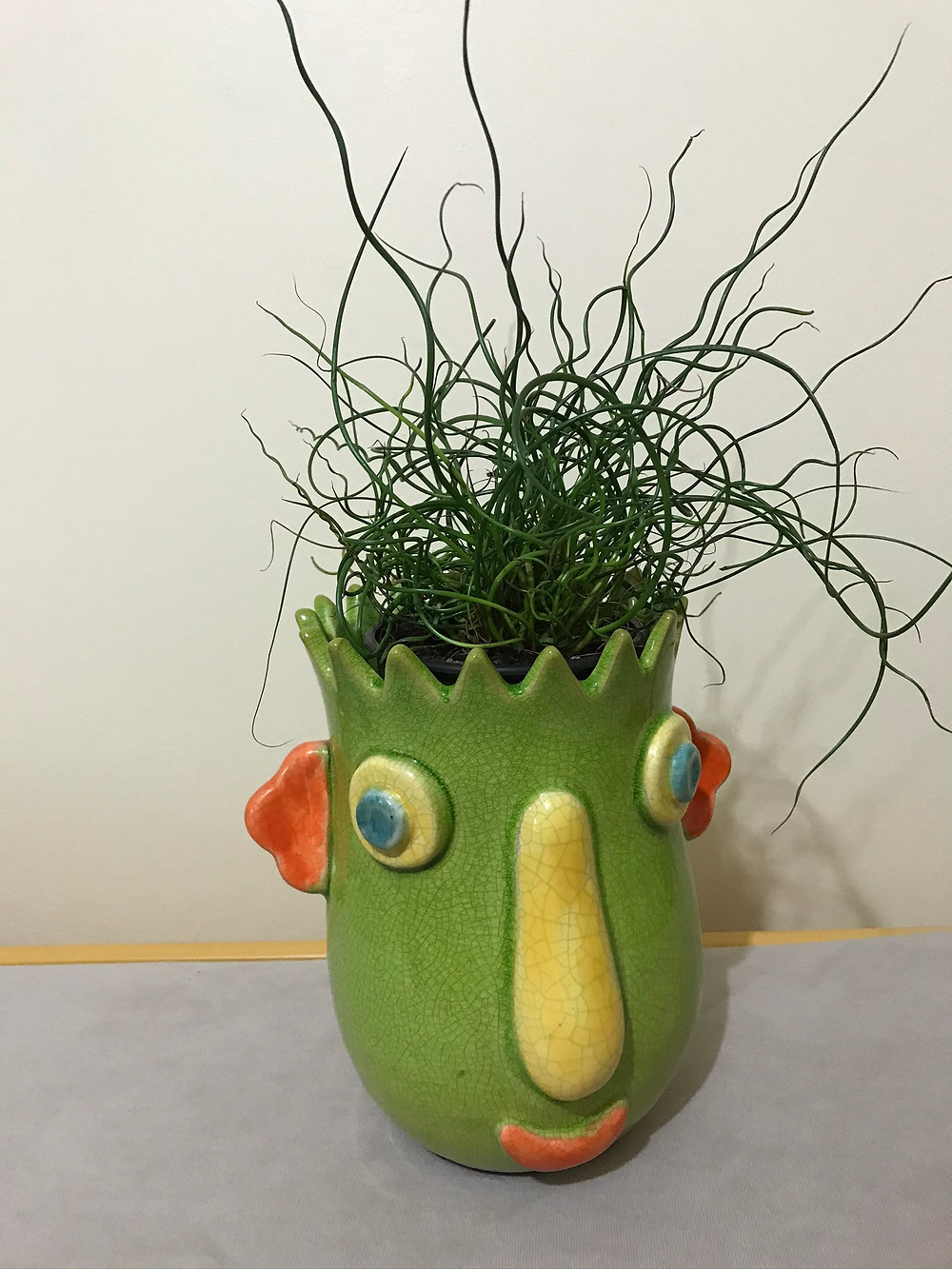 Bad Hair Bob, or corkscrew rush (Juncus effusus) grew well in a sunny room all winter long, and will be accompanying others in outdoor planters.