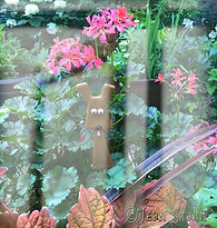 houseplants, container plants