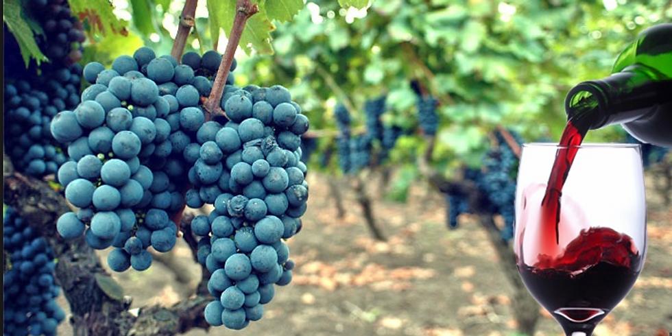 Degustazione Vini: Primitivi Salento IGT