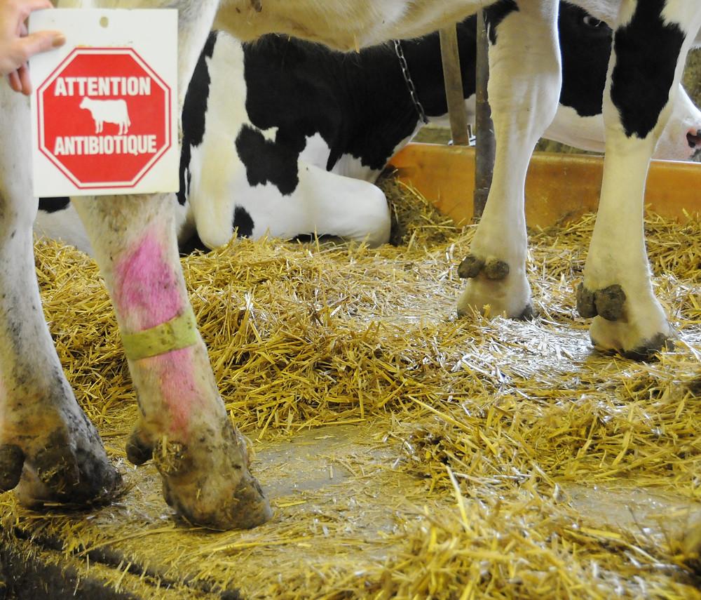Par exemple : une marque de couleur et/ou un bracelet avertit le trayeur que le lait doit être jeté.