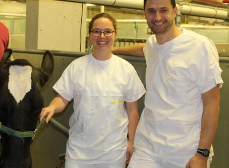 Les antibiotiques en élevage laitier : Pour quoi les vétérinaires les prescrivent-ils?