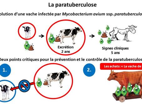 Le programme de prévention et de contrôle de la paratuberculose a eu des impacts positifs!