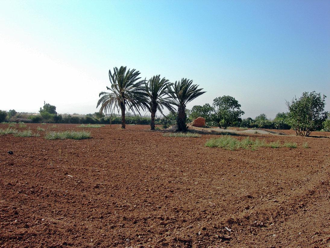 Les palmiers du Jardin aux Etoiles dégagés pour être déplacés