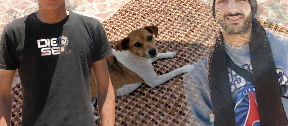 Notre petite Jack Russel nommée Saga retrouvée après une disparition de 10 jours !