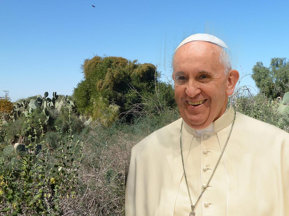 Le pape François devant l'arganier du Jardin aux Etoiles (photo-montage Pluri-Médias)
