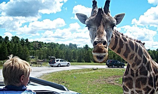 Un parc safari annoncé à Agadir pour admirer les animaux en liberté
