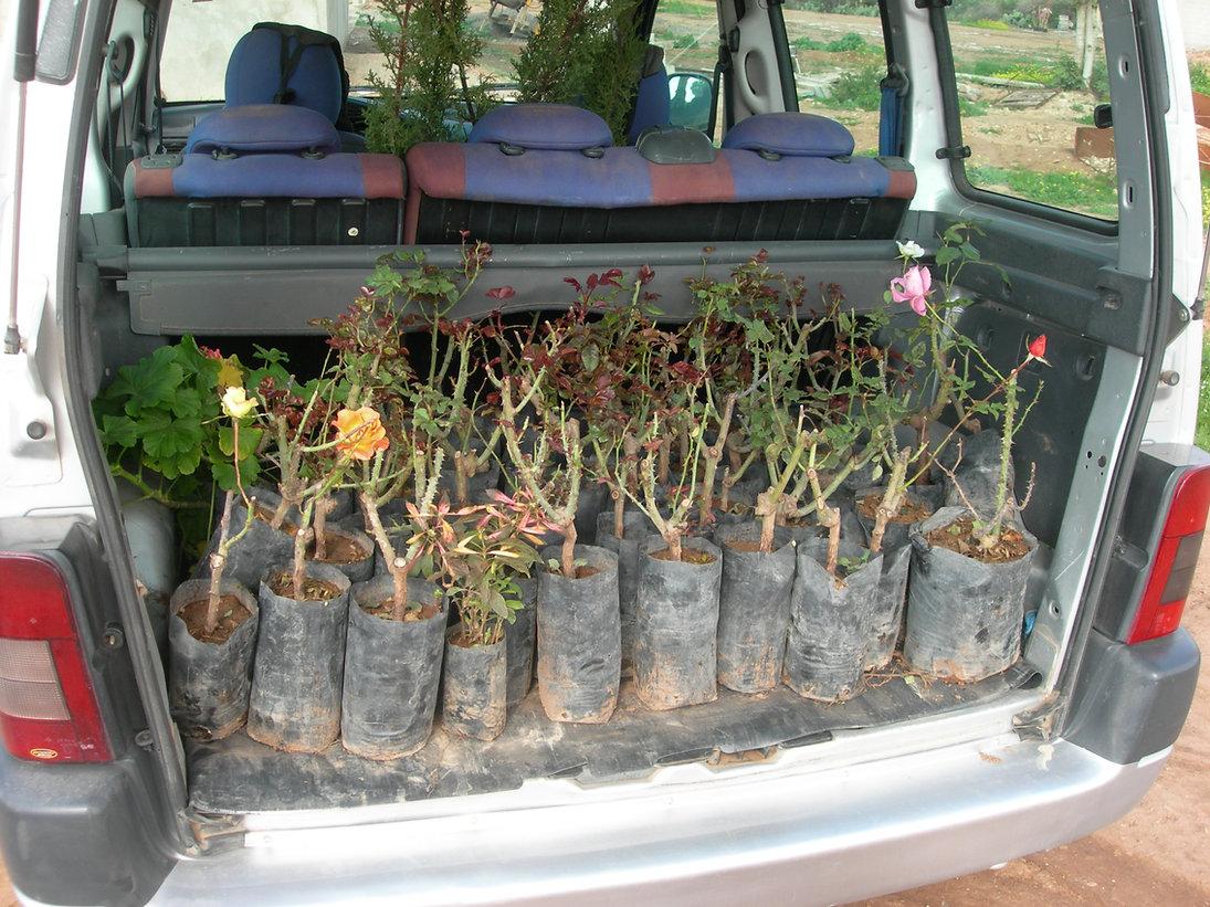 Rosiers multicolores, bananiers, cactus, jasmin du Brésil, orangers