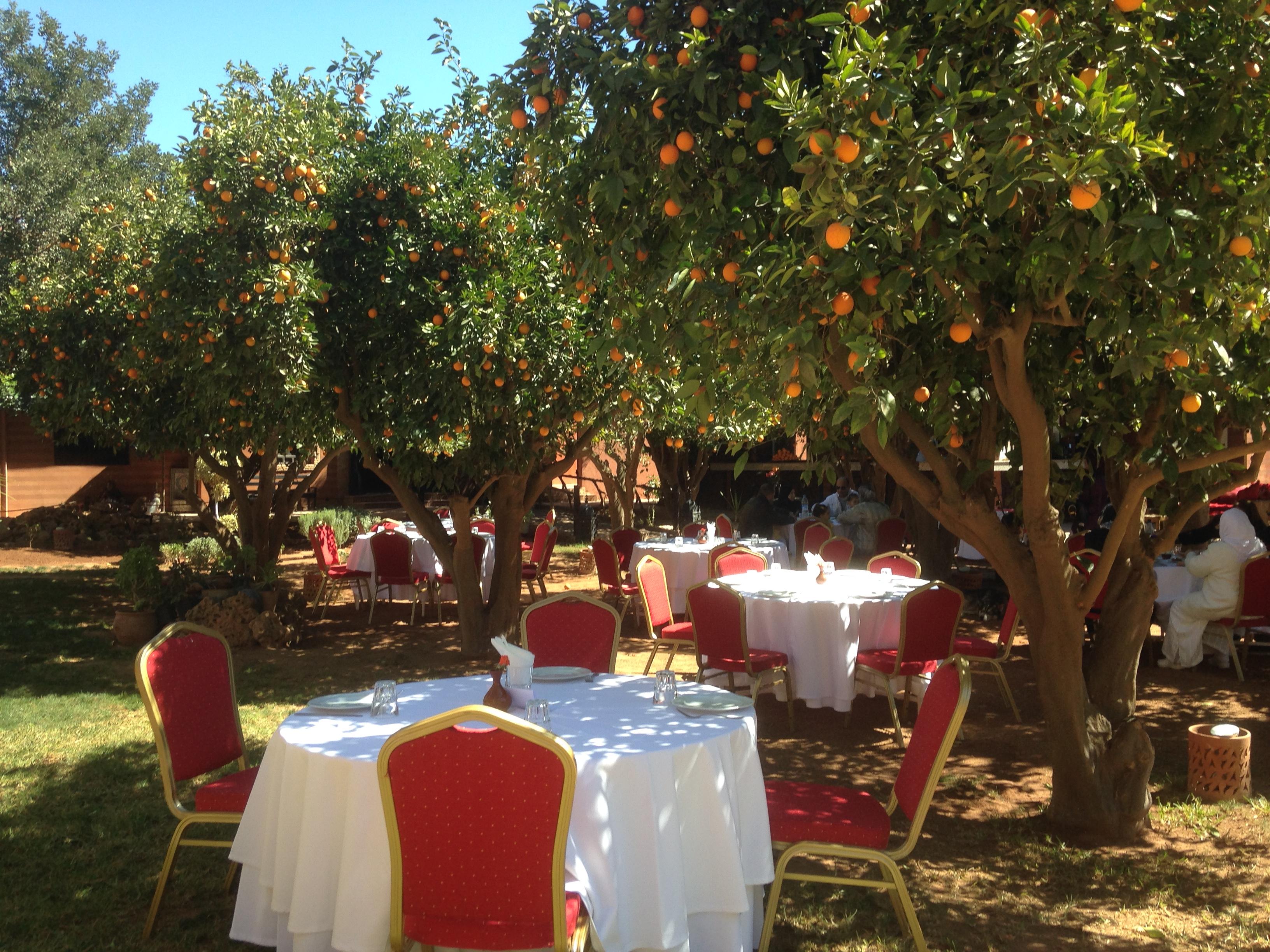Repas sous les orangers