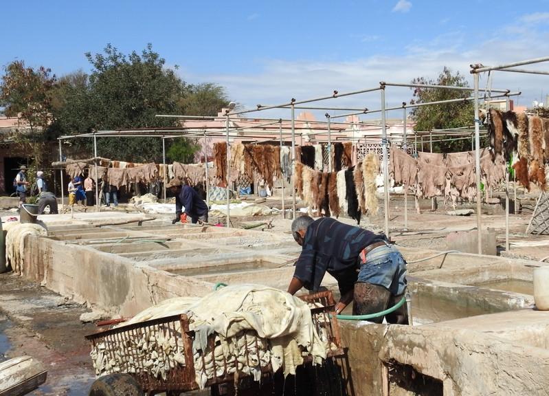 Tanneurs et peaux à la Tannerie de Taroudant