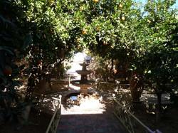 Fraîcheur dans le jardin