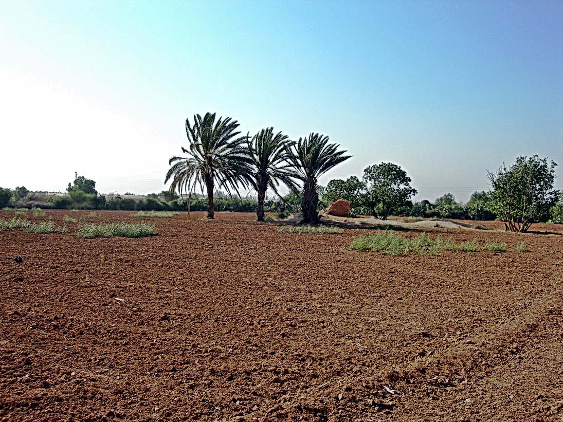 Ce sera ici, à Sidi Boumoussa, douar Ouled Alioua !