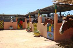 Ranch Amodou à Tamraght
