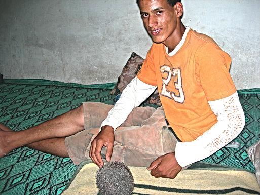 Mon ami Abdelhadi m'apporte des tortues, un hérisson, un caméléon