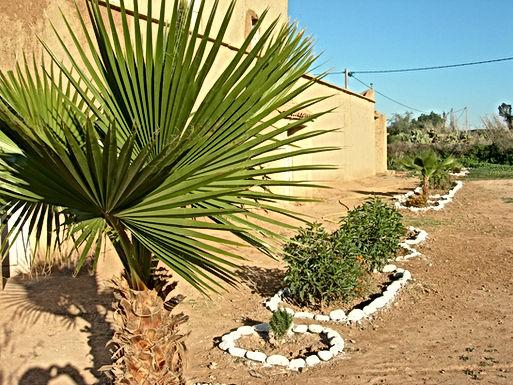 Palmiers de Washington, figuiers de Barbarie et cactus en fleurs