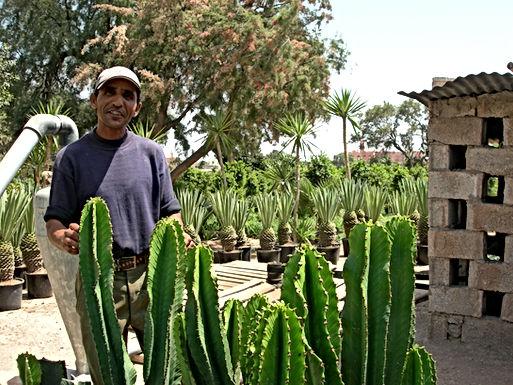 Une colline de cactus nommée Koudia du Levant